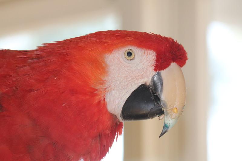 Parrot Up Close