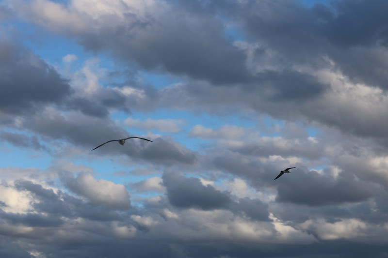 Seagulls Soar over the Ocean