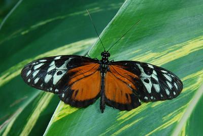 butterfly 1385