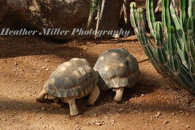 Turtles 1289