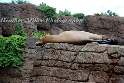 Sea Lion 1320