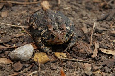 Kenwood Toad-0208