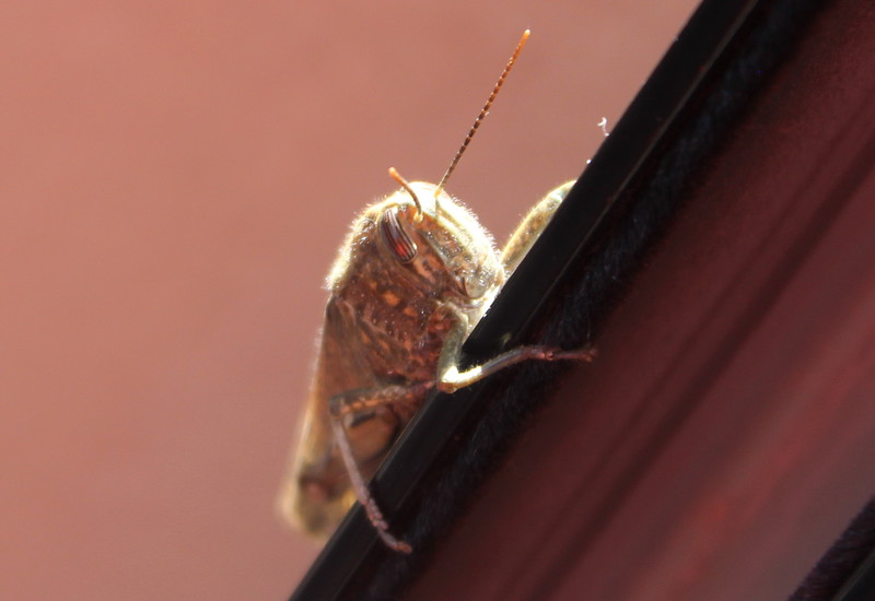 Cicada Climbing