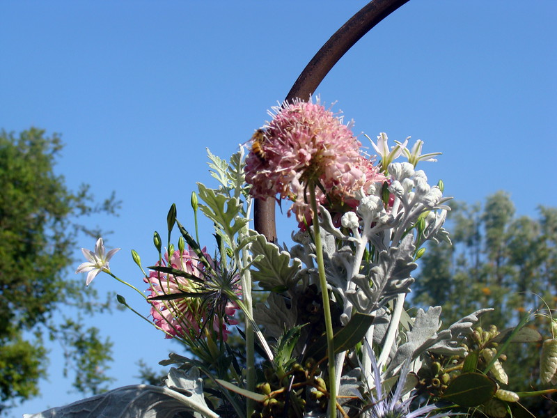 Bee on Allium Flower Arrangement