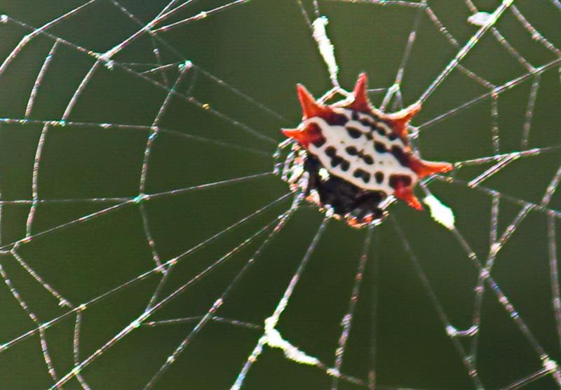 Spider's Underside