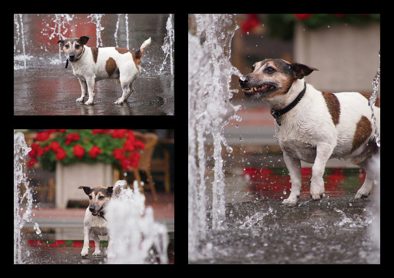 This dog runs and barks all the time against the rays of the fountain. The rays vary in height constantly. His owner tells that he does the same at sea. The dog believes that his barking is responsible for the retraction of the waves and the variation in height of the rays.