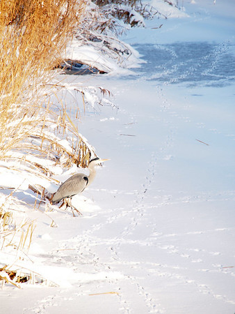 Snow or ice in several seasons / sneeuw of ijs in verschillende seizonen