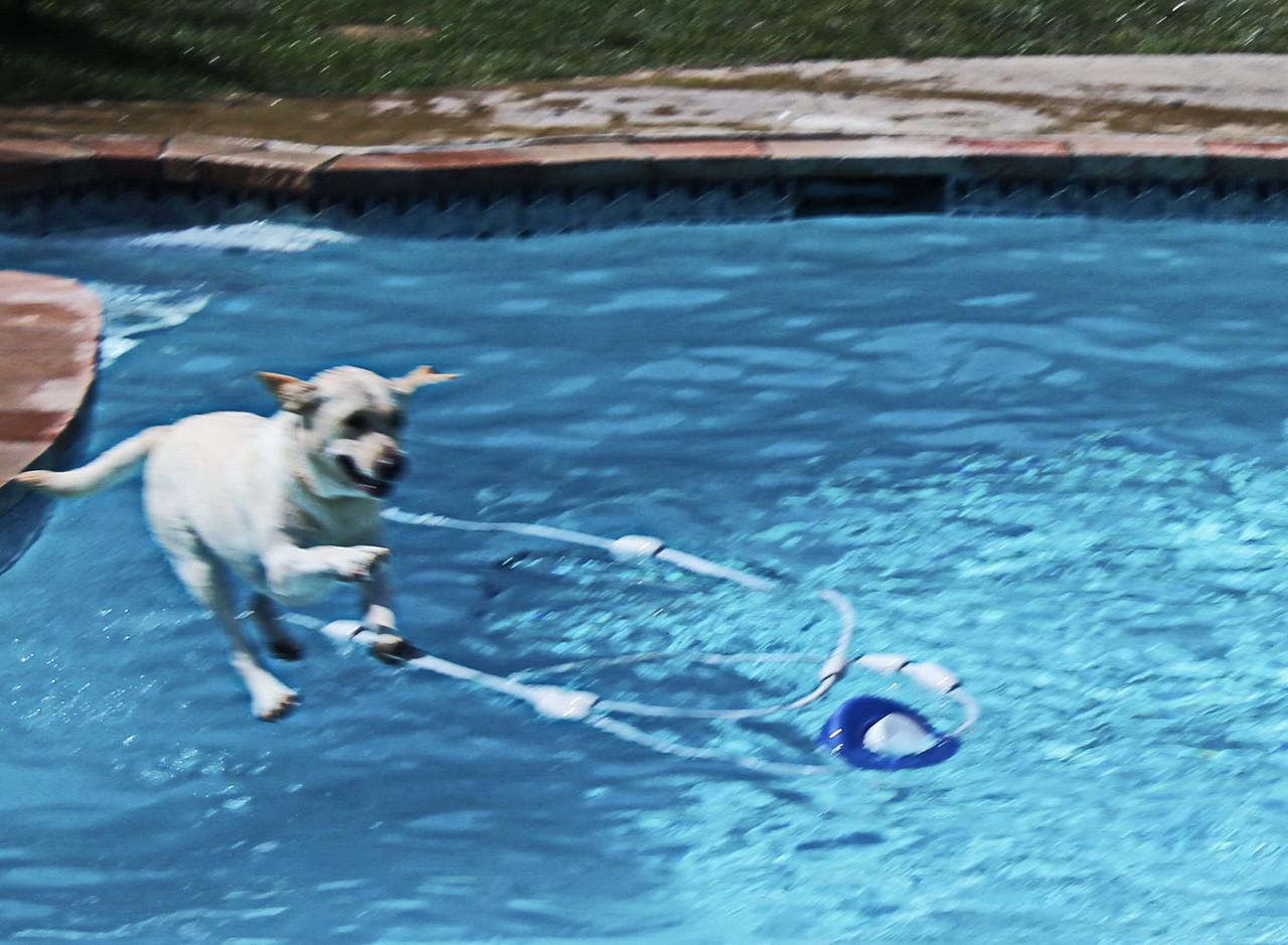Daisy Loves to Swim