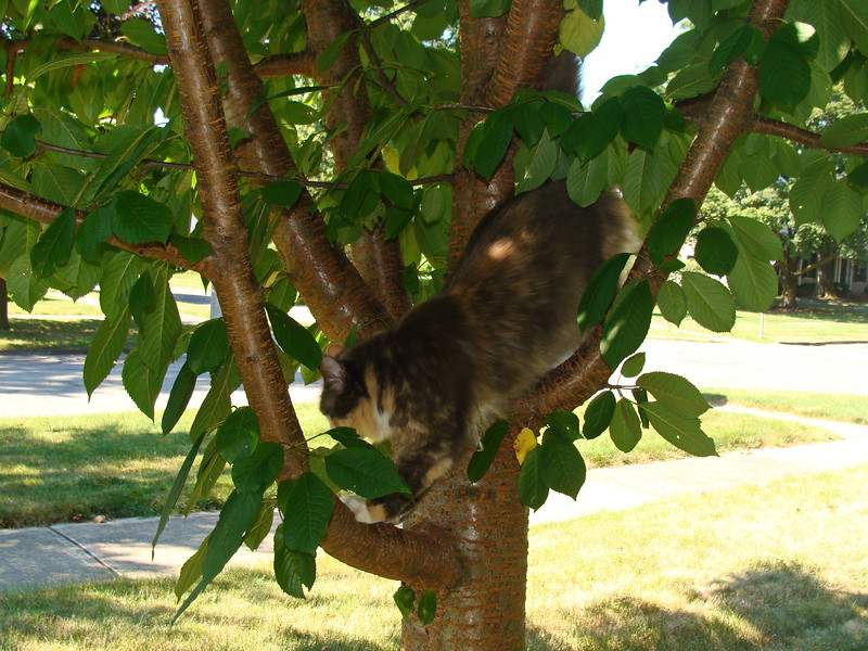 Jasmine Climbs Down the Tree