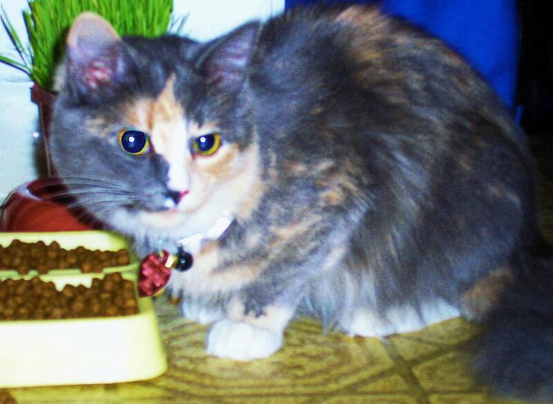Jasmine the Kitten
