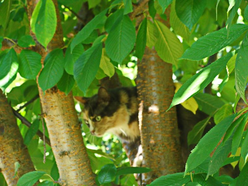 Jasmine Climbs Down