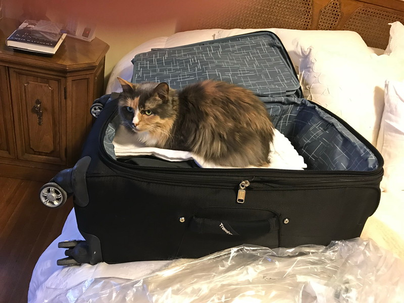 Jasmine Says Take Me With You!