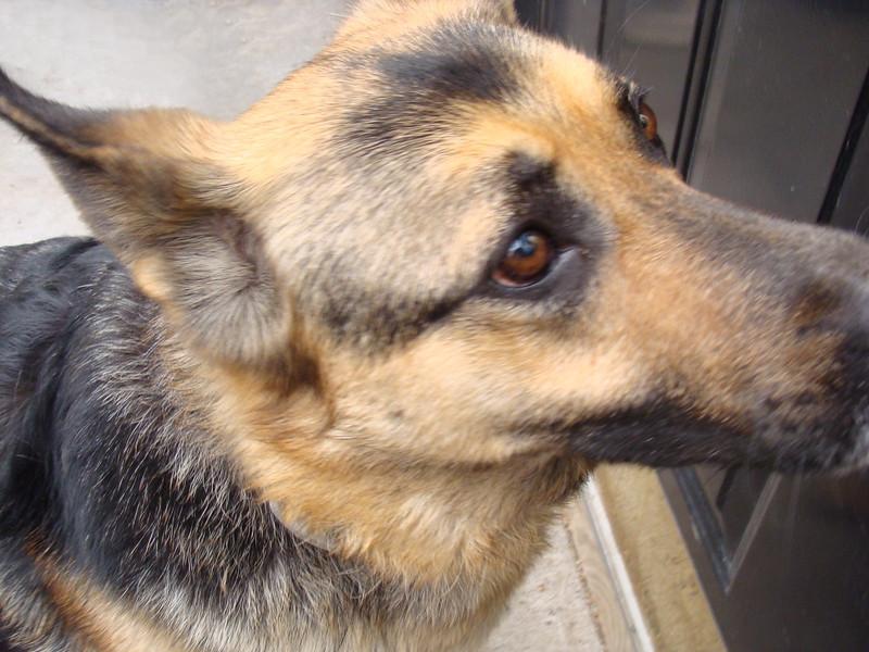Jasmine the Dog