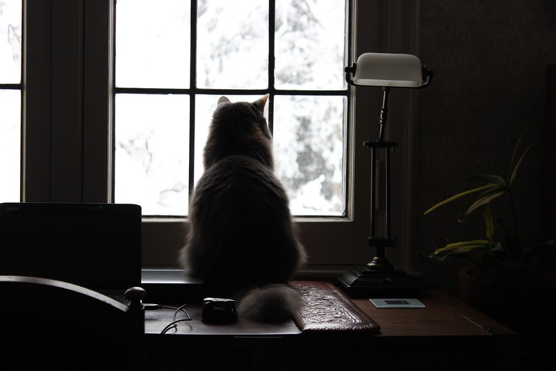 Jasmine Watches the Snow