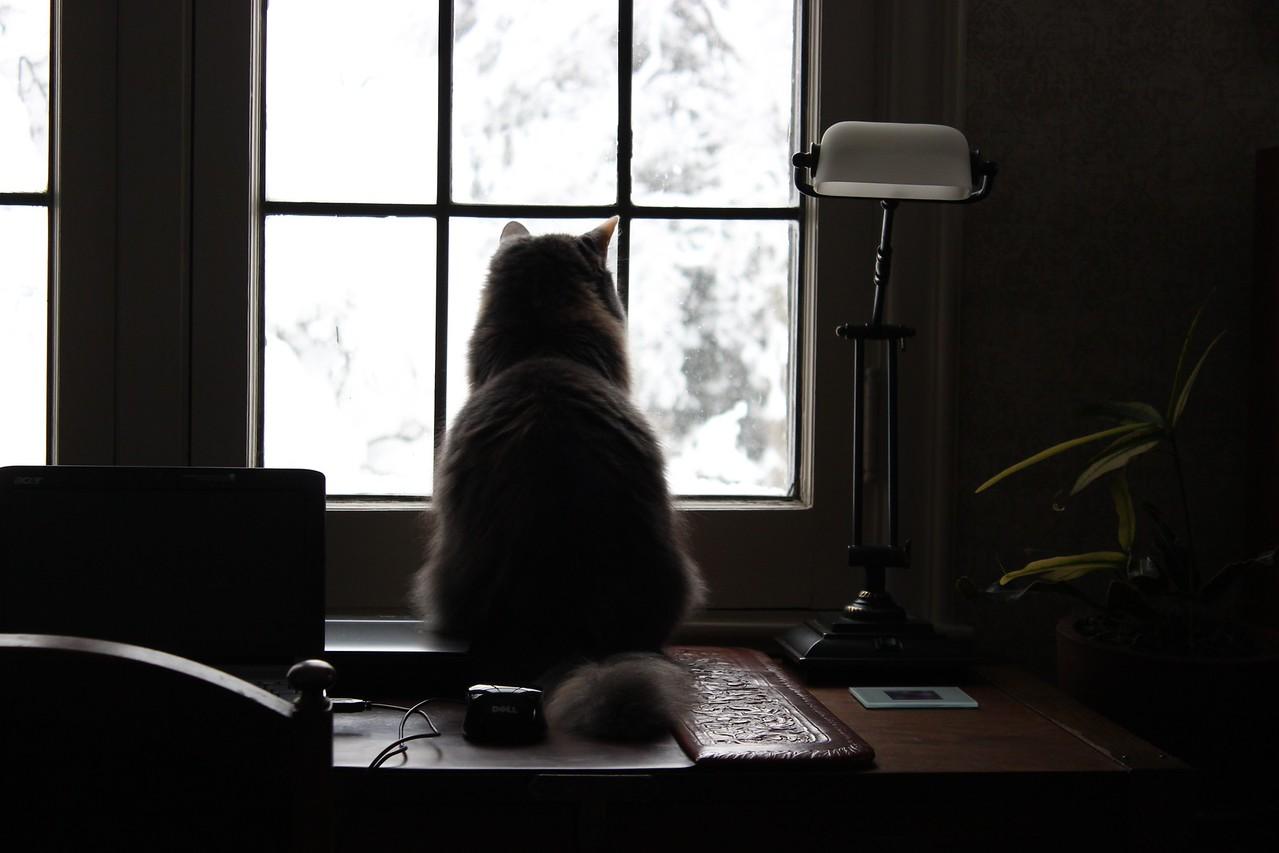 Jasmine Watches the Snow