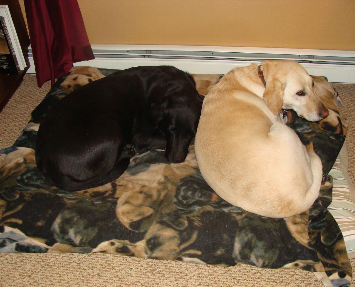 Mica and Kaya Take a Nap