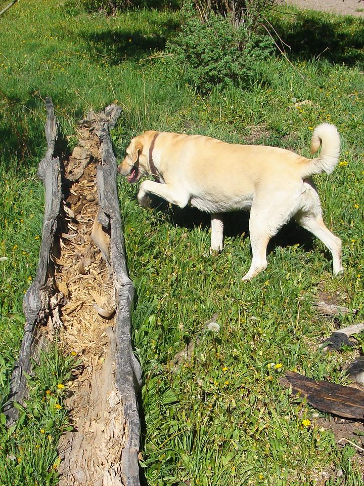 Kaya Explores a Log