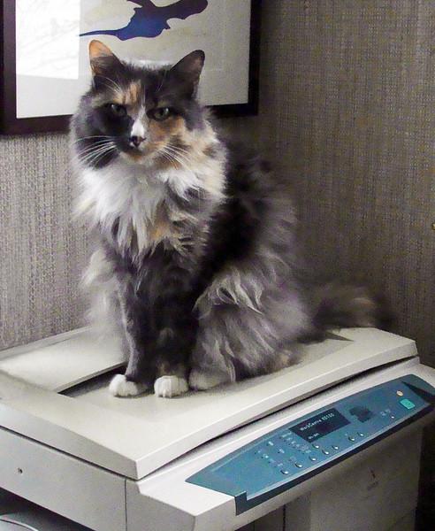 Jasmine the Copy Cat