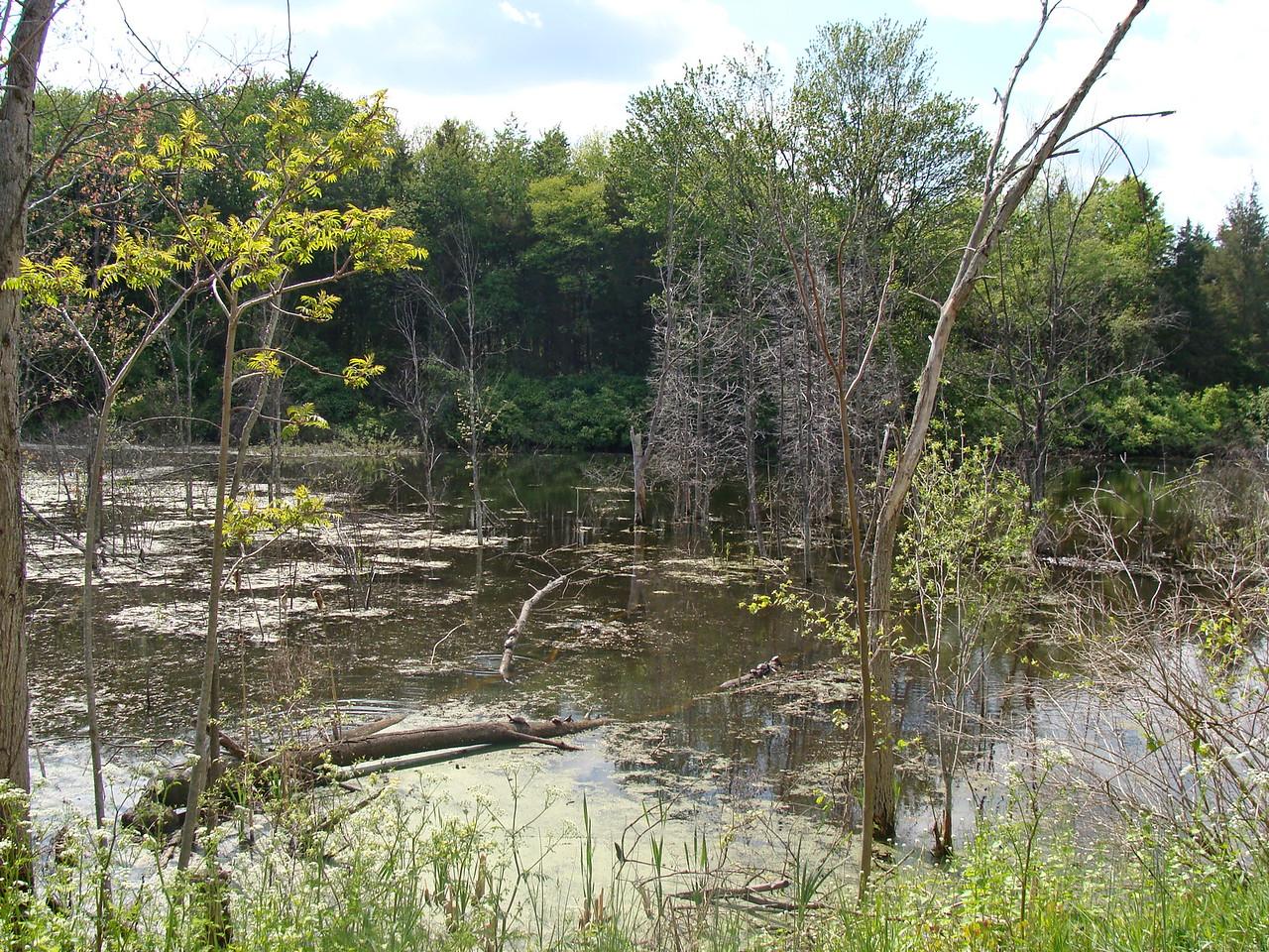 Turtles on a Fallen Tree in a Wetland
