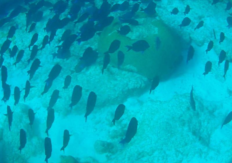 Underwater Trail