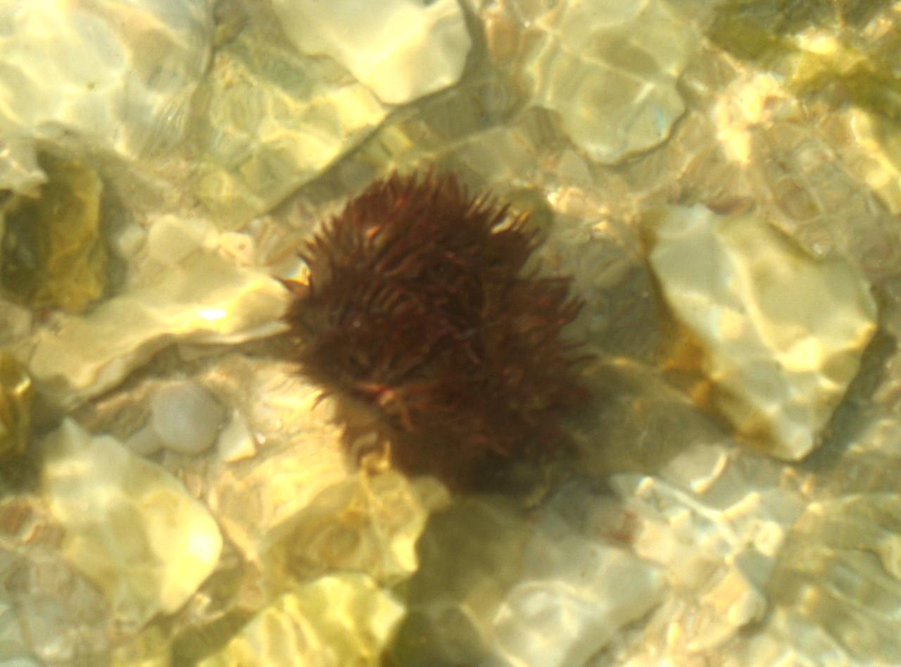 Anemone under Water