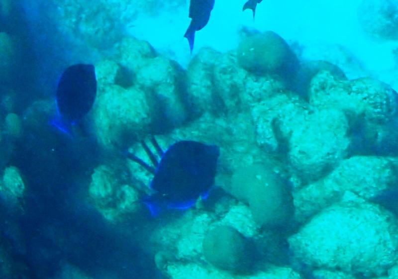 Blue Light Underwater