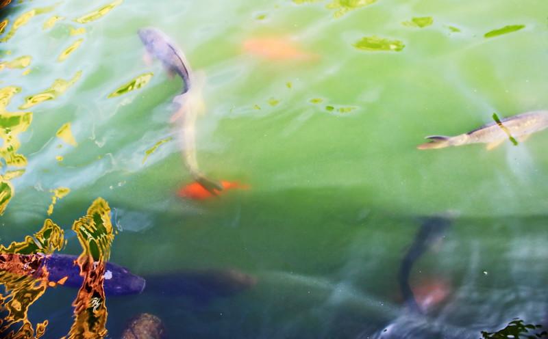 Mercury Fountain Fish Pond with Koi