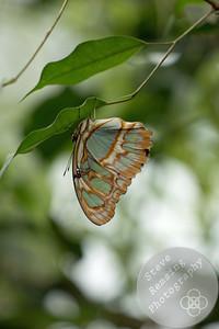 Butterflies in Blooms