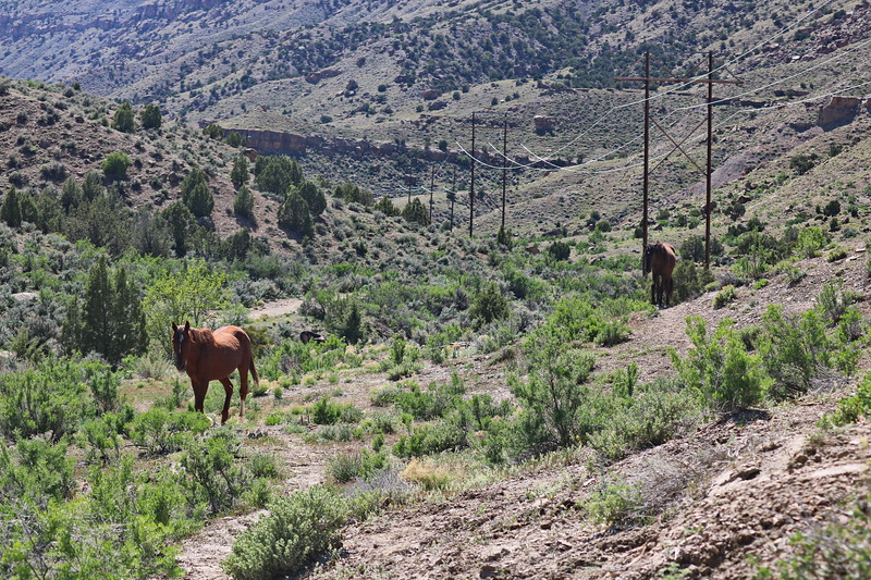 Horses Head to the Little Book Cliffs