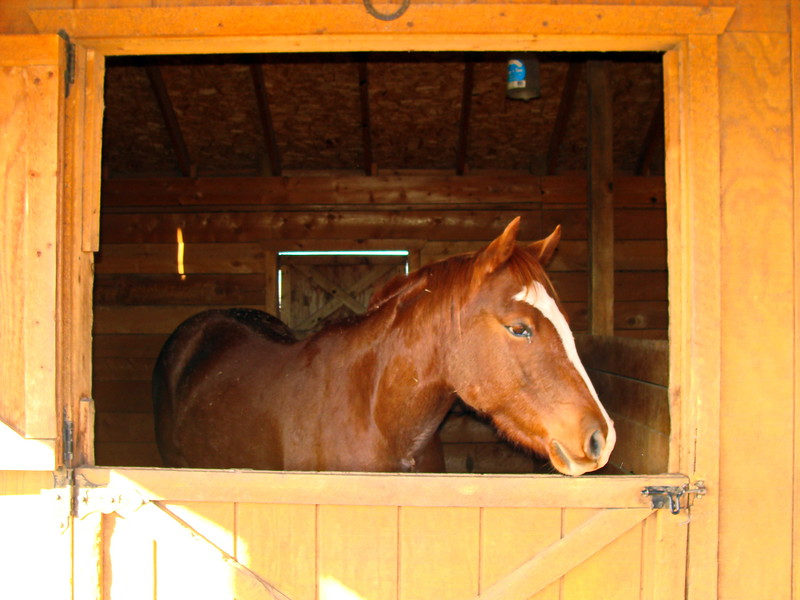 Brown Horse in the Barn