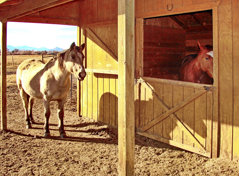 White Horse at the Barn