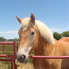 Visiting Horse