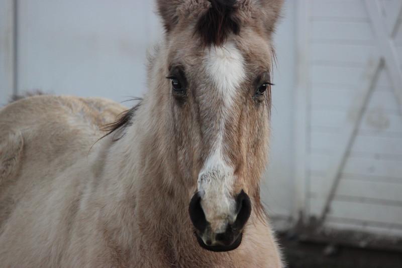 Furry Horse