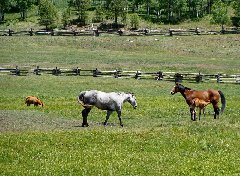 Baby Horse Nurses