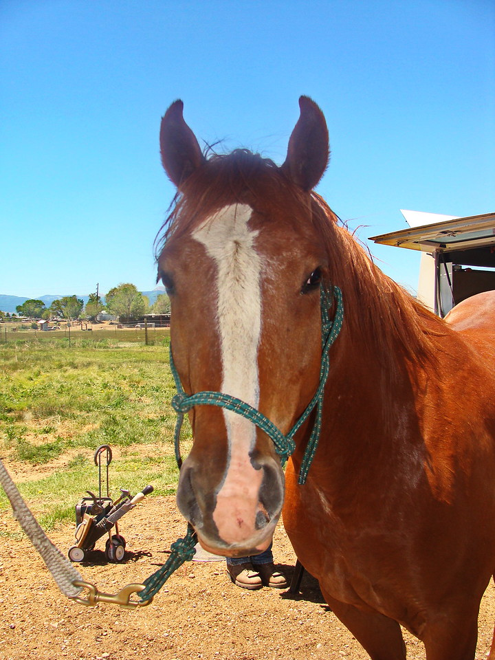 Brown Horse with White Facial Stripe