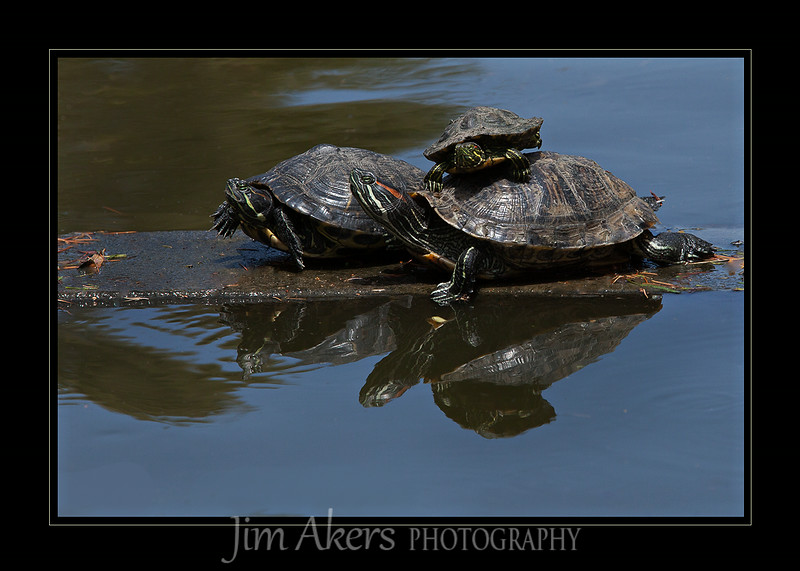 A quickie shot at Douglas Park in Santa Monica. There is something about turtles I like.