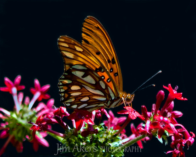 Shot at Museum of Natural History Butterfly Pavilion in Los Angeles