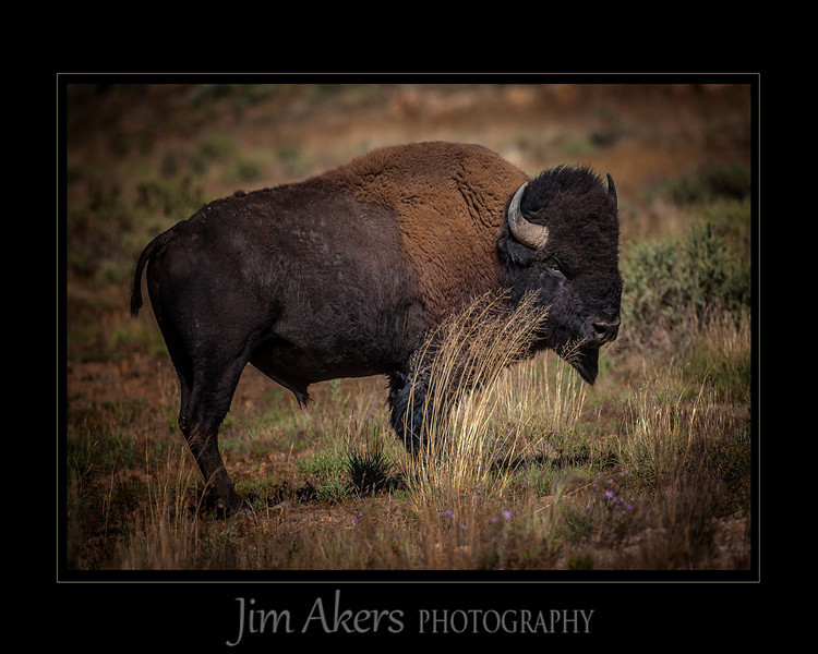 Shot in New Mexico at the Vermejo Park Ranck which is a Ted Turner piece of property.