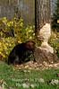 Autumn beaver v