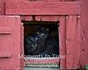 Black kitten pair in door