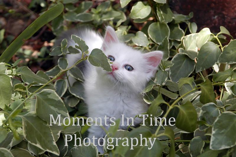 White kitten in leaves