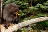 Porcupine with yellow flower