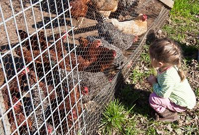 girl-chickens-2
