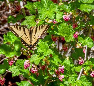 flowers-butterfly