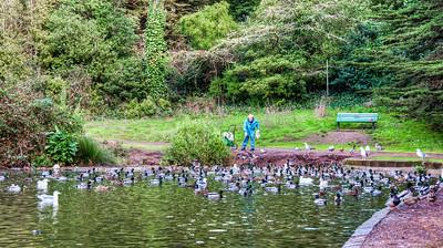 man-feeding-ducks