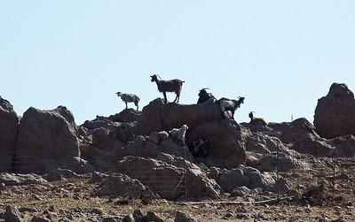 greece-goats