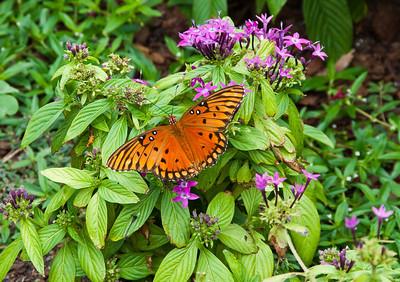 golden-butterfly-flowers