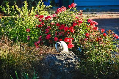 garden-flowers-cat
