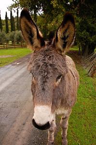 donkey-ears-2