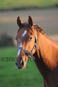 WHP_0169 horse shanaway copy